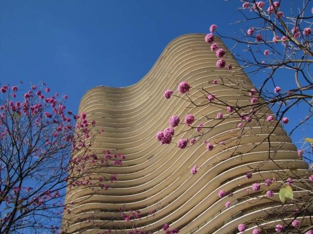 Ed Niemeyer BH